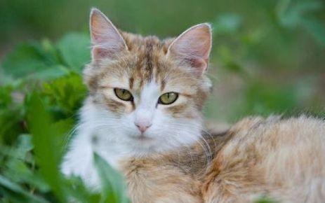 Grande-Bretagne : 4 mois de prison pour avoir tué son chat au micro-ondes   C'est mon droit   Scoop.it