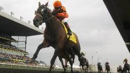 Death of a racehorse: Strait of Dover's handlers recall his final hours -- The Globe and Mail | The Jurga Report: Horse Health, Welfare, and Care | Scoop.it