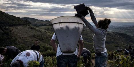 Pourquoi le vin compte autant pour la France, en septgraphiques | Le vin quotidien | Scoop.it