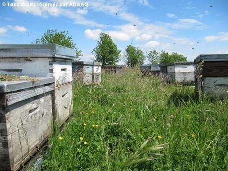 Les enjeux de l'apiculture en Aquitaine | Nature et Environnement | Actualités en Aquitaine | Aquitaine OnLine | BIENVENUE EN AQUITAINE | Scoop.it