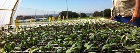 Lo verde echa raíces en la ciudad | Agricultura y Ganaderia | Scoop.it
