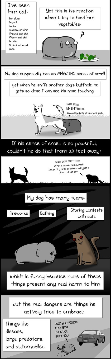 My Dog: The Paradox - The Oatmeal | This Gives Me Hope | Scoop.it