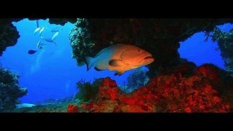 Vidéo Full HD | Mexique - Voyage plongée dans le Yucatan ! | Plongeurs.TV | Scoop.it
