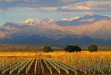 Un millésime 2014 qui s'annonce difficile pour le vin argentin - Magazine du vin - Mon Vigneron | Actualités du Vin | Scoop.it