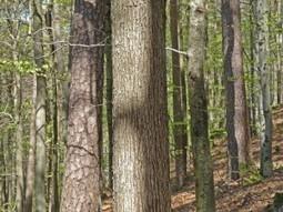 Vosges, le silence en péril | DESARTSONNANTS - CRÉATION SONORE ET ENVIRONNEMENT - ENVIRONMENTAL SOUND ART - PAYSAGES ET ECOLOGIE SONORE | Scoop.it