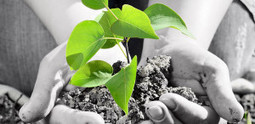 6 Tools For Learning About Plants | eclectic technology | Scoop.it