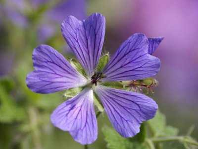 Eau florale - Hydrolat - Hydrosol | Huiles essentielles HE | Scoop.it