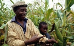Boost Grain Preservation Before Production - AllAfrica.com | Local Grain News | Scoop.it
