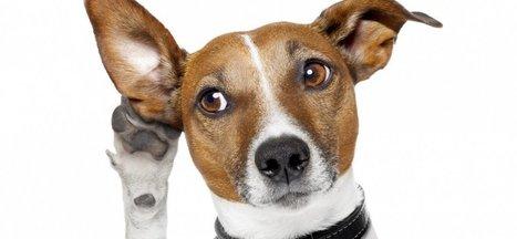 7 Smart Reasons You Should Talk Less and Listen More | Bon(ne) vent(e) ! | Scoop.it