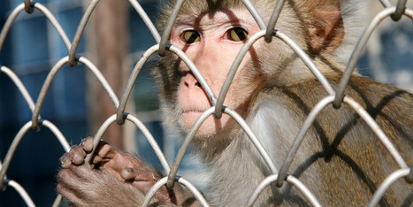 Ivy League School Receives Rare Penalty For Animal Welfare Violations | Animals R Us | Scoop.it