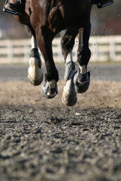 Sending Your Horse on Trial? Protecting Yourself and Your Horse - Catanese Law a law corporation | Equine Law | Scoop.it