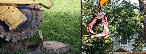 The expert tree removal contractor - Pinellas Services LLC. | Pinellas Services LLC | Scoop.it
