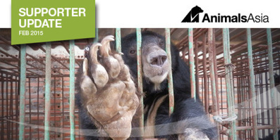 Vietnam:  Tragedy – Animals Asia News – Campaign Expands as 13 More Bile Bears Die in Halong Bay. | GarryRogers Biosphere News | Scoop.it