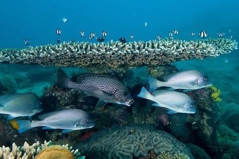 Fishy behavior: ocean acidification alters the way fish behave | Amocean OceanScoops | Scoop.it