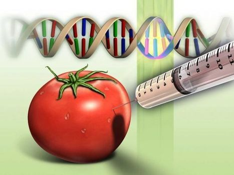 5 Myths That GMO Companies Want You To Believe   Collective ...   GMO   Scoop.it
