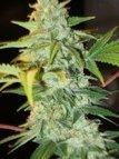 Growing Herbs from Indoor Marijuana Seeds Easily | Food | Scoop.it