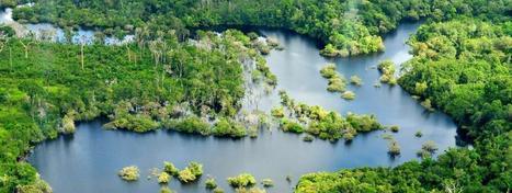Forêt amazonienne, 1820 espèces animales découvertes dans une région inconnue ! | Biodiversité & Relations Homme - Nature - Environnement : Un Scoop.it du Muséum de Toulouse | Scoop.it