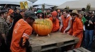 Elysian's Great Pumpkin Beer Festival Expands to 3 Days! October 4 - 6, 2013 - thefullpint.com | Seattle, Geekly | Scoop.it