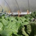 Innovators Embrace Aquaponics to Strengthen Local Food Systems, Address Food Security Issues and More | Vertical Farm - Food Factory | Scoop.it