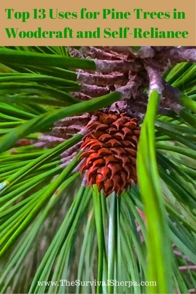 Top 13 Uses for Pine Trees in Woodcraft and Self-Reliance | Bushcraft Tactical Survival | Scoop.it