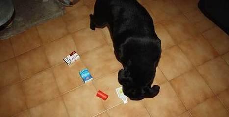 Divertirsi col cane… anche dentro casa | Benessere animale | Scoop.it