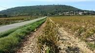 Le premier buveur de vin de France | Vin, Culture & Société : articles, conférences, dossiers... en ligne | Scoop.it