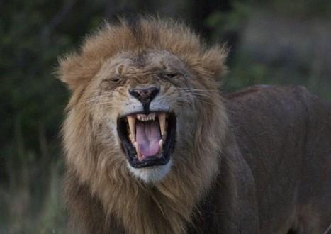 Great Leaders Serve - Leadership Lessons from Kenya | Mediocre Me | Scoop.it