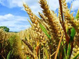 Uruguay - Crop Production   Uruguay, Quinton Tart   Scoop.it