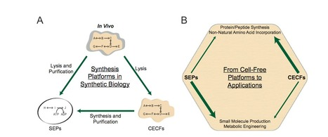 Fluorescent proteins and in vitro genetic organization for cell-free synthetic biology | SynBioFromLeukipposInstitute | Scoop.it