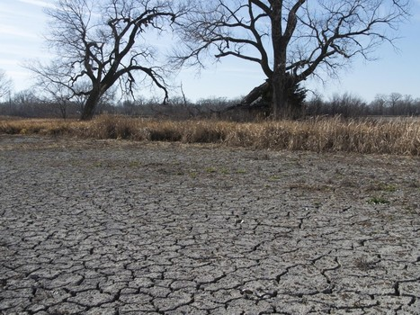 A quarter of global agriculture is grown in water-stressed regions   Wheat   Scoop.it