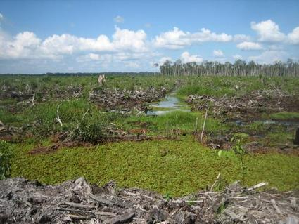 Satellites for peat's sake | Sustain Our Earth | Scoop.it