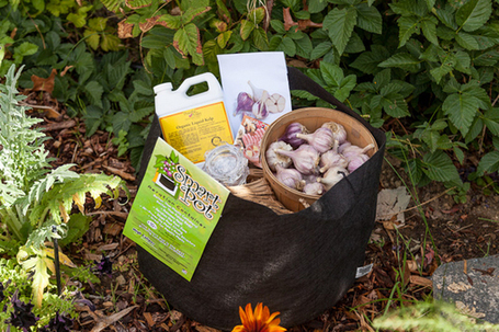No Garlic Left Behind (We're Giving it Away!) | Natural Soil Nutrients | Scoop.it