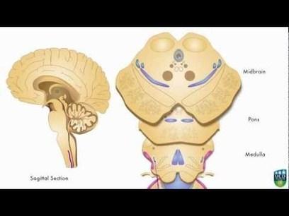 Neurology YouTube Channel | Salud Social Media | Scoop.it