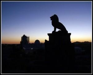 Le lion noir | développement personnel | Scoop.it