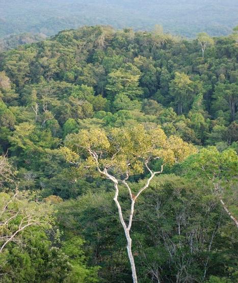 Comment se maintient la biodiversité en forêt tropicale primaire? | EntomoNews | Scoop.it