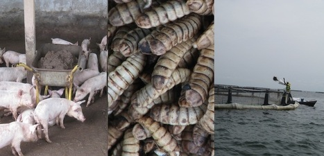 Aquaculture Waste Insects – University of Stirling   Aquaculture Directory   Scoop.it