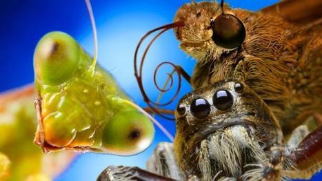 Naomi's Nightmares of Nature - Ten incredible insects & spiders   Miscellaneous Topics   Scoop.it