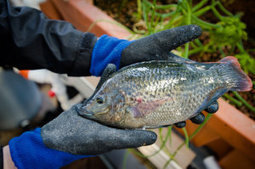 Fish tacos: A nutritional lunch | Vertical Farm - Food Factory | Scoop.it