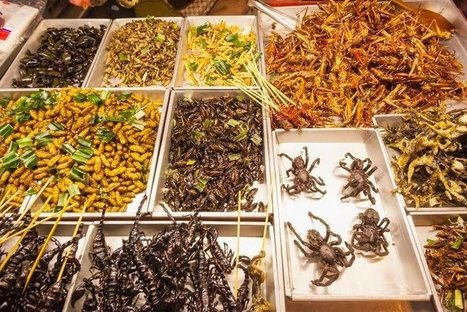 Five Ways to Start Eating Insects | Entomophagy: Edible Insects and the Future of Food | Scoop.it