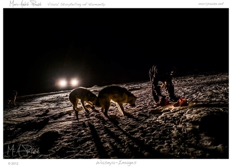Feeding the dogs |  Marc-André Pauzé | Dogs and People | Scoop.it