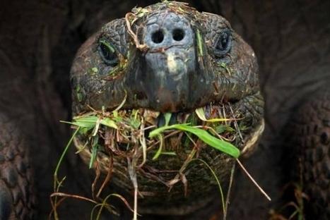 Tortugas en peligro de extinción sobreviviendo gracias a plantas invasoras — Noticias de la Ciencia y la Tecnología (Amazings®  / NCYT®) | Agua | Scoop.it