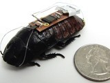 Could Cyborg Cockroaches Save Your Life? | Science News | Scoop.it