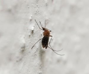 5 remèdes naturels anti-moustiques vraiment efficaces | Ca m'interpelle... | Scoop.it