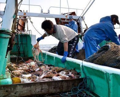 Trial fishing operations restart off Fukushima coast - AJW by The Asahi Shimbun   NuclearRadiance   Scoop.it