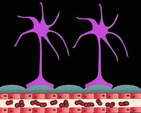 Study Shows How Brain Tumor Cells Move and Damage Tissue   Social Neuroscience Advances   Scoop.it