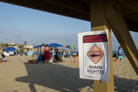 California beach closed: Are humans more dangerous than sharks? | All about water, the oceans, environmental issues | Scoop.it