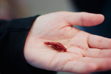 Il est grand temps de se mettre à manger des criquets | Post-Sapiens, les êtres technologiques | Scoop.it