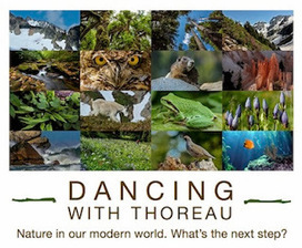 Dancing with Thoreau: New Film by Chris Korrow | Permaculture - [creatively] re-design our communities, environment and our behavior | Scoop.it