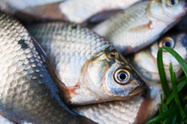 Fish eyes used to detect disesase - Health - NZ Herald News | NanoBiomedical Diagnostics | Scoop.it