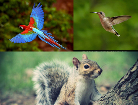 Photoshop animal hybrids tutorial   Graphic Design   Scoop.it